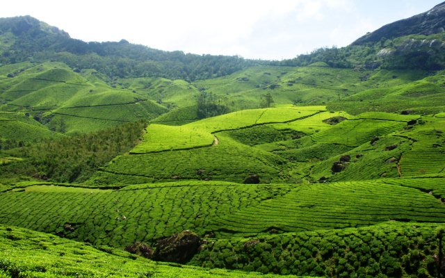 Spend your romantic honeymoon in Munnar Kerala