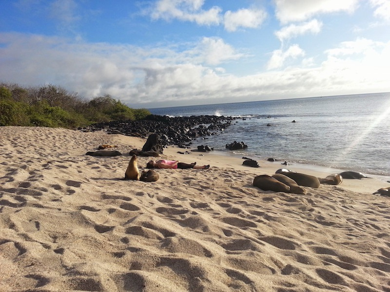 5 Reasons Why You Should Visit Galapagos