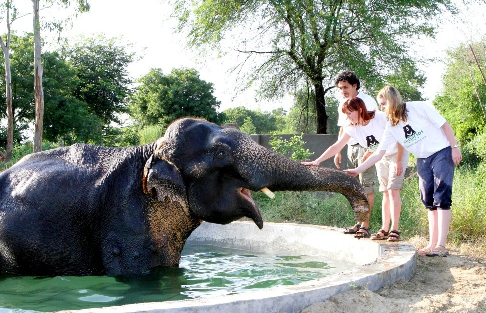 Top Three Places For Elephant Enthusiasts in India